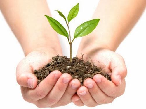 Secretaria de Agricultura e Meio Ambiente lança programa Plante Árvore