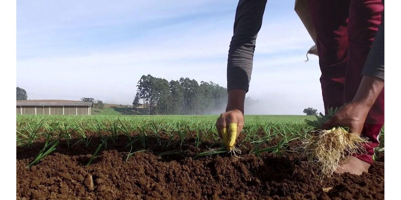 Administração fará acompanhamento dos trabalhadores contratados para o plantio da cebola para evitar