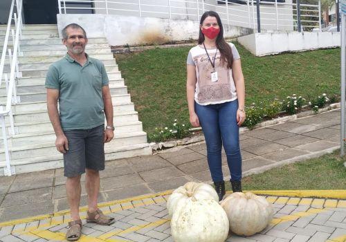 Agricultor colhe abóbora gigante em Ituporanga