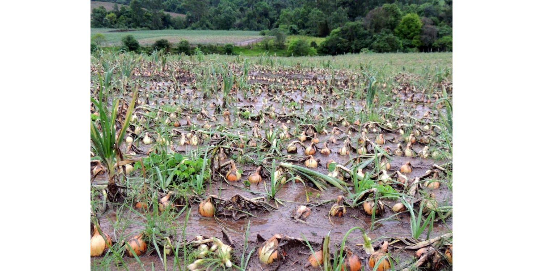 Secretaria de agricultura  solicita apoio aos agricultores afetados pela chuva