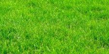 Prefeitura faz licitação para compra de grama e telhas