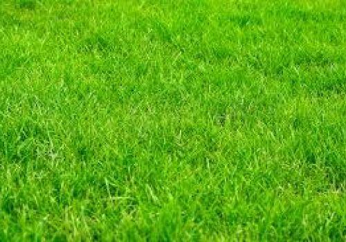 Prefeitura faz licitação para comprar grama e telhas